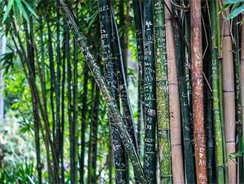 राष्ट्रीय बांस मिशन -एनबीएम (National Bamboo Mission -NBM)