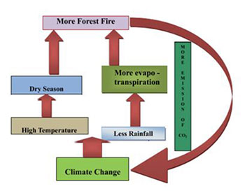 Reasons of forest fire